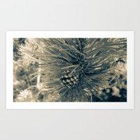 Spruce Pine Art Print