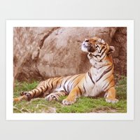 Malayan Tiger I Art Print
