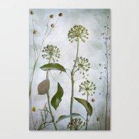 Hedera Canvas Print