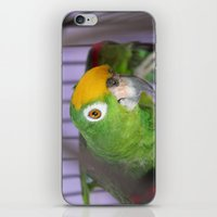 Polly Want A Cracker? iPhone & iPod Skin