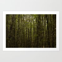 Forest For Trees Art Print
