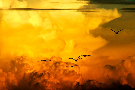 Flight at the Golden Hour Art Print