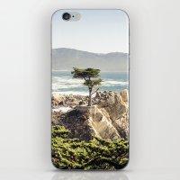 The Lone Cypress iPhone & iPod Skin