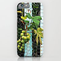 iPhone & iPod Case featuring Backyard Vineyard  by Ethna Gillespie