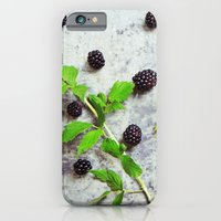 iPhone & iPod Case featuring Scattered Blackberries by diane555