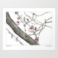 April Blossoms Art Print