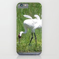 Whooping Crane iPhone 6 Slim Case