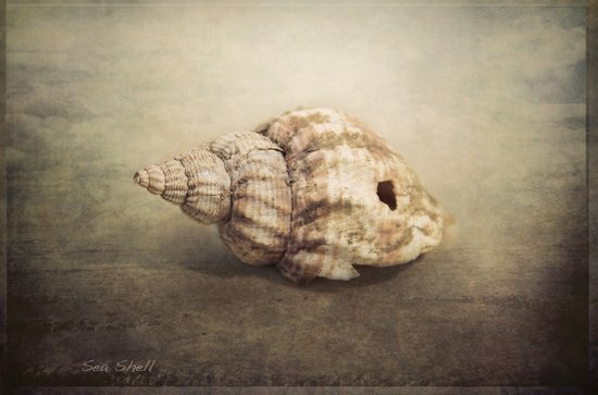 The Sea Shell Art Print