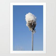 Snow Blossom Art Print