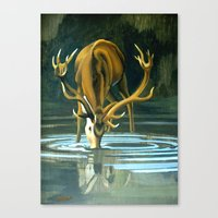 Red Stag Drinking Canvas Print