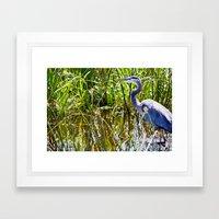 Great Blue Heron In The Wetlands Framed Art Print