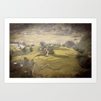 Rice Field Art Print