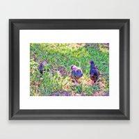 Hens In A Field Framed Art Print