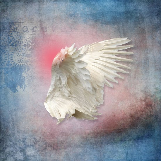Lost Angel Wing Canvas Print