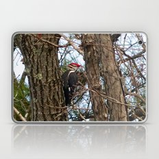 Male Pileated Woodecker Laptop & iPad Skin