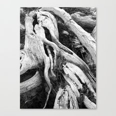 our roots go deep.  Canvas Print