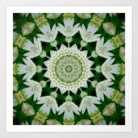 Astrantia Mandala Art Print