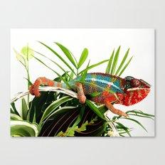 Colorful Chameleon Canvas Print