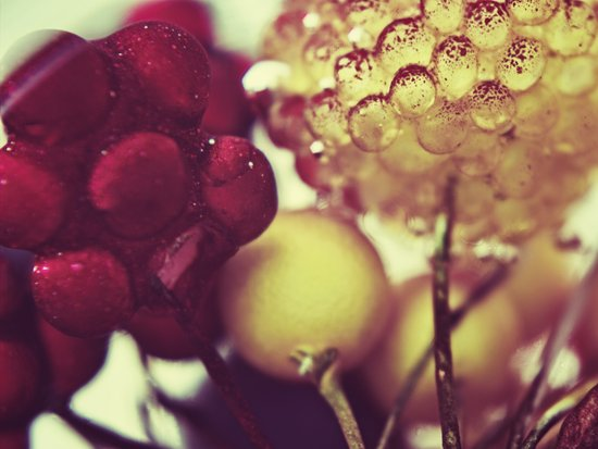 :: berries :: Art Print