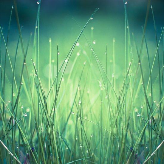 light-water and grass Art Print