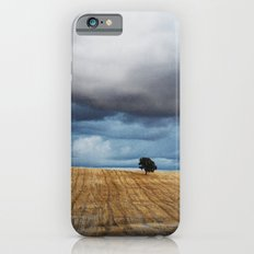 Lonely tree waiting for the storm iPhone 6 Slim Case