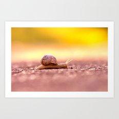 Snail shell Design Art Print