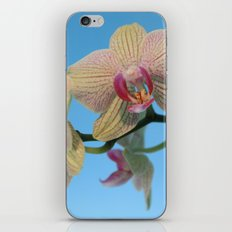 Orchids And Blue iPhone & iPod Skin