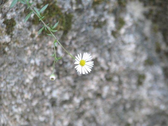White flower on the stone Art Print