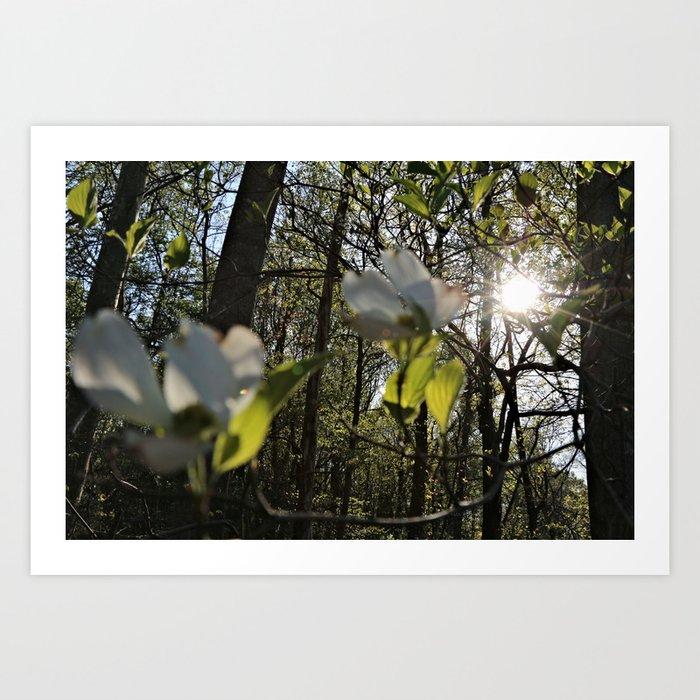 breaking-light-and-flower-prints.jpg
