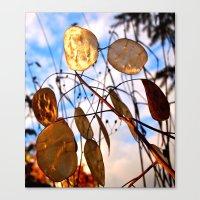 Autumn Money Plant Canvas Print