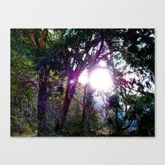 Trees at Lake Crescent Canvas Print