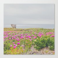 Across The Flowers To Th… Canvas Print
