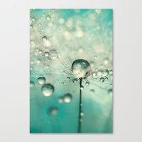 Single Dandy Starburst Canvas Print