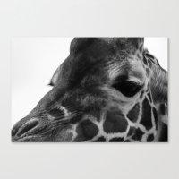 Zoo series no.3 giraffe Canvas Print