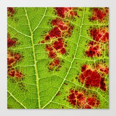 autumn wine leaf I Canvas Print