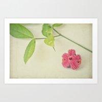 Strawberry Bush Art Print