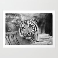 Tiger#4 Art Print