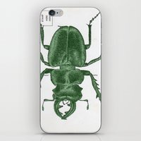 Green Beetle Postcard iPhone & iPod Skin