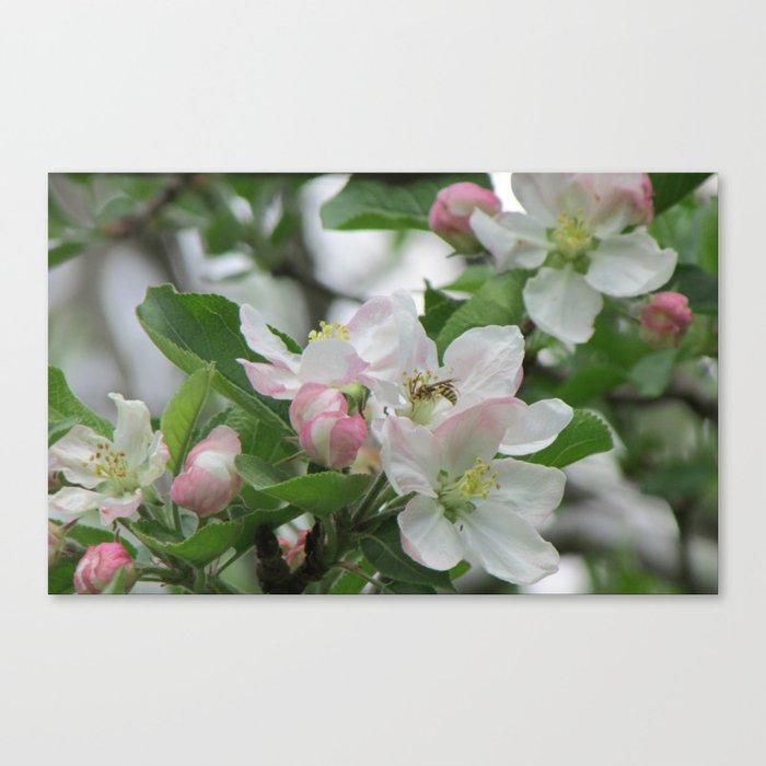 backyard apple tree canvas print by designsbymarly society6
