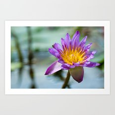 Blue Egyptian Water Lily 540 Art Print