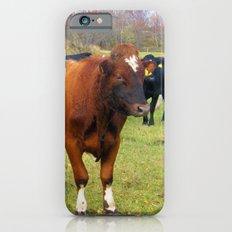 Cows iPhone 6s Slim Case