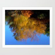 Yellow Leaves Reflection Art Print