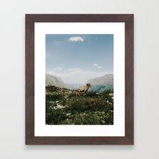 Bighorn Overlook Framed Art Print