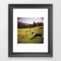 Cows Framed Art Print