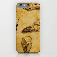 iPhone & iPod Case featuring Magpie Bird Skull Drawing by Swell Dame