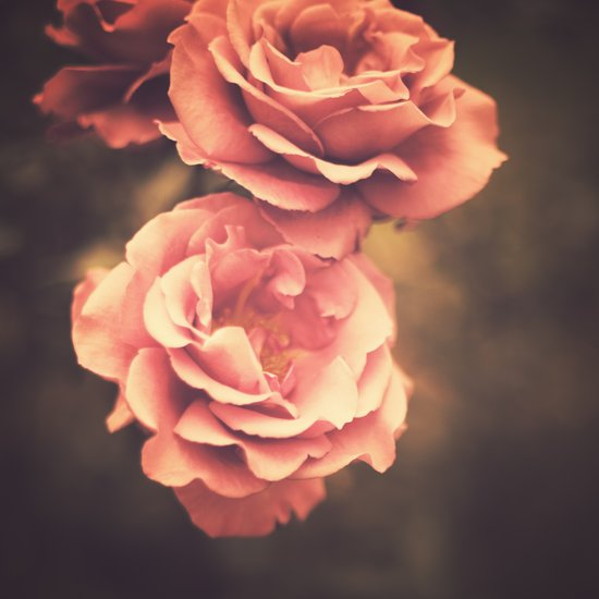 Roses (Vintage Flower Photography) Art Print