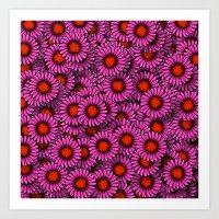 Echinacea Art Print