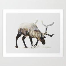 Arctic Reindeer Art Print
