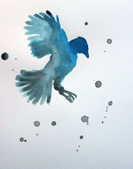 Bluejay Canvas Print