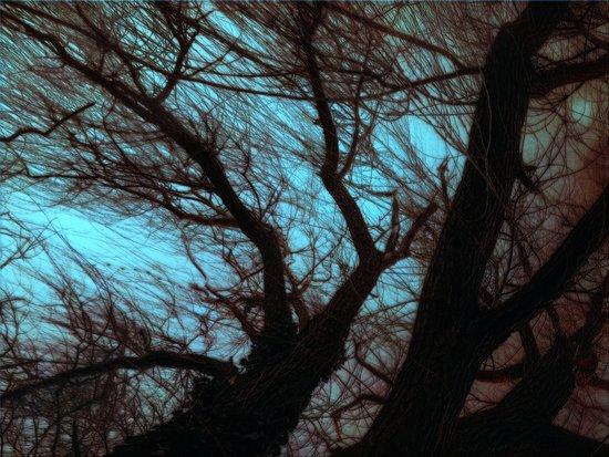 Under the willow ~ Aqua Art Print